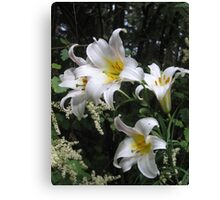 Lilies and Lace Canvas Print