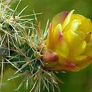 Desert Bloom by K D Graves Photography
