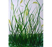 LB Grass Photographic Print