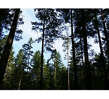 Pacific Northwest Photographic Print