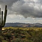 The Arizona High Desert  by Saija  Lehtonen