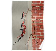 Urban Red Wall Vine Poster