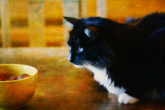 Still life with cat by Lynn Starner