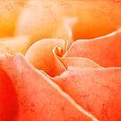 Orange by Lynn Starner