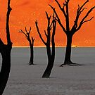 Namibia ~ A World Apart by Jill Fisher