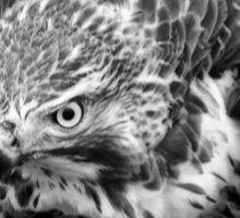 Hawk Hulking Up Sticker
