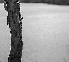Trunk by Lake - Lennox Head by Daniel Rankmore
