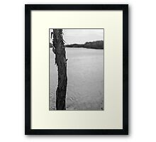 Trunk by Lake - Lennox Head Framed Print