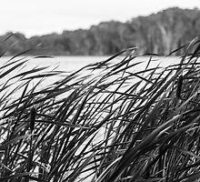 The Long Reeds - Lennox Head by Daniel Rankmore