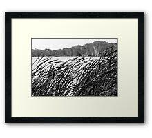 The Long Reeds - Lennox Head Framed Print