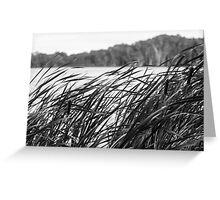 The Long Reeds - Lennox Head Greeting Card