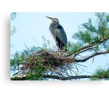 Supreme Ruler of the Nest Canvas Print