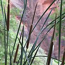 Cattails in Zion by Christine Ford