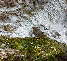 New Beginnings...A Dippers Tale by VoluntaryRanger