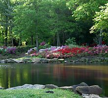 Azaleas At The Pond by Carolyn  Fletcher