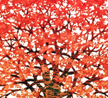 Maple Tree 1 Sticker