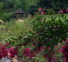 Crepe Myrtle Invades Rose Garden! by Carolyn  Fletcher