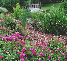 Honor Heights Park's Lovely Rose Garden by Carolyn  Fletcher