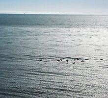 Birds Flying Over Sea by colettelydon
