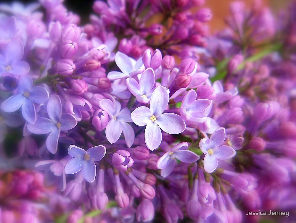 Lilac by Jessica Jenney
