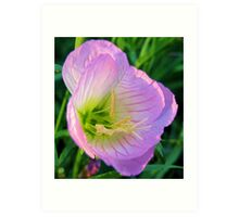 Pretty in Pink - Evening Primrose, Pink Lady - Texas Wildflower Art Print