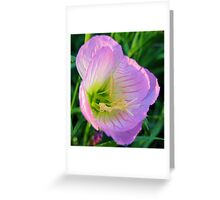 Pretty in Pink - Evening Primrose, Pink Lady - Texas Wildflower Greeting Card