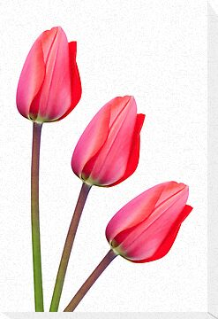 Red Tulip Trio by Natalie Kinnear