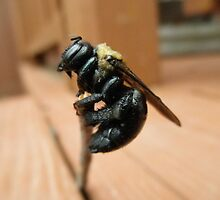 Bumble bee by ack1128
