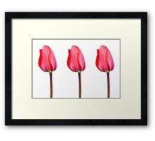 Three Red Tulips in a Row Framed Print