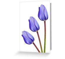 Three Purple Tulips Greeting Card