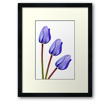 Purple Tulip Trio Framed Print