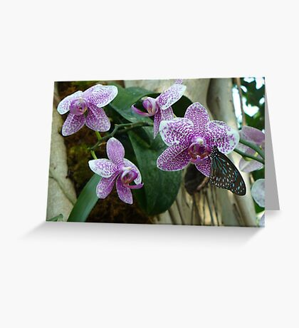 Black and Blue Butterfly on Purple and White Orchids Greeting Card