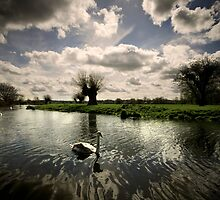 Swans On The Stour by Darren Burroughs
