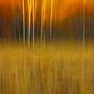 Birch At The Edge Of The Field 2015 by Thomas Young