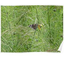 God Draws Lines with Wind, Grass, Coreopsis Buds Poster