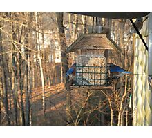 Blue Birds  Photographic Print