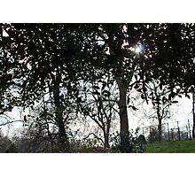 Sun's Hearth Photographic Print
