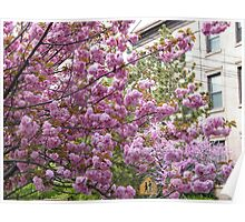 Jersey City, New Jersey, Spring Flowers Poster