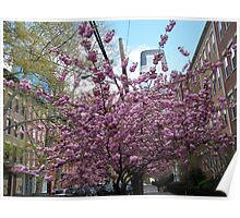 May Jersey City, New Jersey, Spring Colors Poster