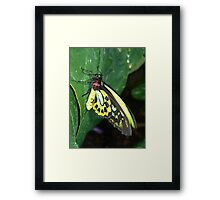 Colors of the Rainbow Butterfly Framed Print