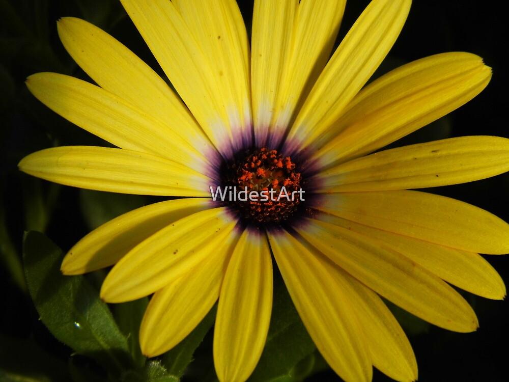 Upsy Daisy by WildestArt