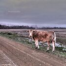 Back road hitchhiker by Erykah36