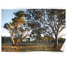 Morning on Wattle Heath Farm Poster