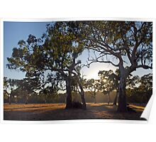 Morning on Wattle Heath Farm # 2 Poster