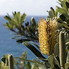 Byron Banksia by Daniel Rankmore