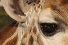 Eye, Ear & Wrinkles by Carole-Anne