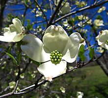 Spring Renewal by Kenny M. Davis