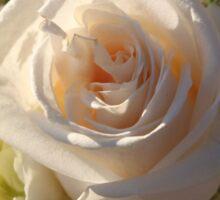 Elegant White Roses Sticker