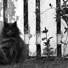 Fat Cat by Fence by snhood