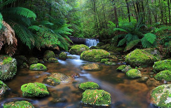 Tranquillity on Koala Creek by Donovan wilson